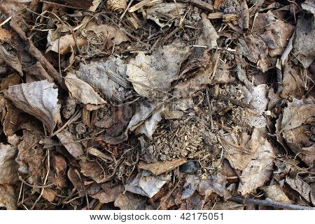 Pile Of Grey Dry Leaves In Early Spring