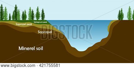 Sapropel And Peat In Nature. Structure Of Pond And Marsh With Bottom Sediments. Vector Illustration