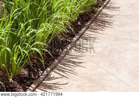 Garden Stone Path With Grass Growing Up