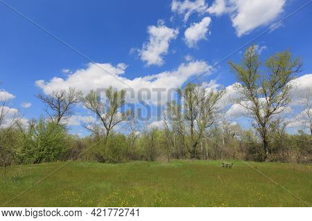 Nice spring landscape with green meadow in forest