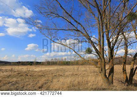 Sunny spring landscape with leafless trees on dry grasland