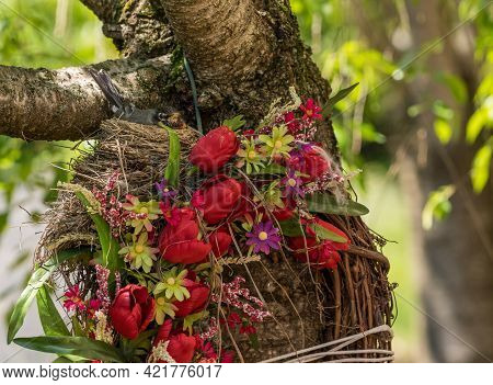 American Robin Sitting In A Nest Built On A Flower Door Wreath And Fastened To Garden Tree Trunk