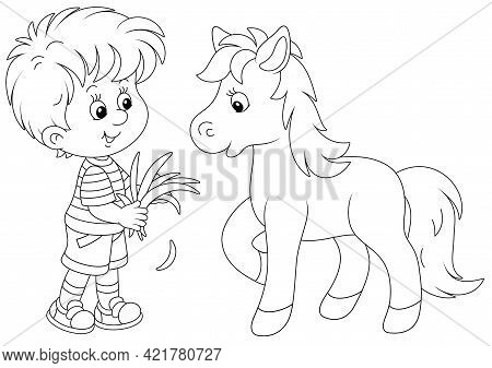 Happy Little Boy Feeding A Cute Small Pony With Fresh Grass, Black And White Outline Vector Cartoon