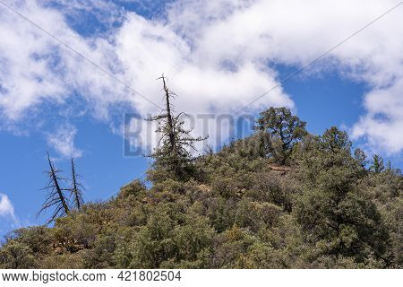 Los Padres National Forest, Ca, Usa - April 8, 2010: Closeup Of Pinacle Of Green Forested Mountain T