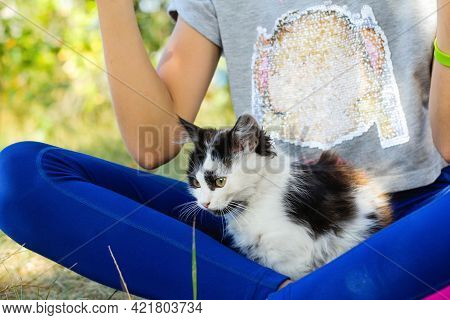 Defocus Girl Holding And Playing With Cat, Black And White Small Kitten. Nature Green Summer Backgro