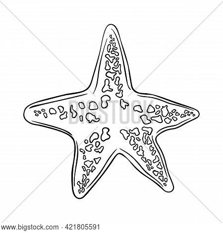 Hand Drawn Marine Starfish Nature Ocean Aquatic Underwater Vector. Engraving Illustration On White B