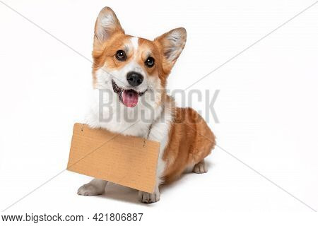 Funny Smiling Welsh Corgi Pembroke Dog With Empty Cardboard Sign Hanging Around Its Neck, Isolated O