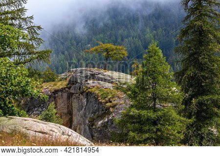 Green trees grow on the rocks and forest on the mountain's slope on background in Piedmont, Northern Italy.