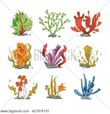 Underwater Plants In Cartoon Vector Style. Ocean Life, Underwater Sea, Nature Seaweed Illustration