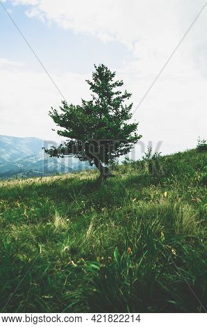 Close-up Growing Deciduous Tree On Small Slope Mountain, Hill Overgrown With Green Grass, Flowers An