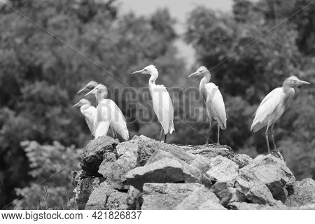 Birds Sited Together , Black And White Photo Of Birds , Birds Family