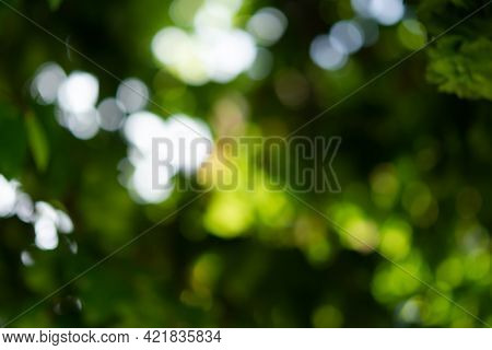 Blurry Abstract Green Tree Background. Beautiful Bokeh Foliage In Bright Sunlight. Conceptual Natura