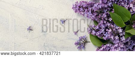 Banner With Top View Of Purple Lilac Flower On The Bush. Flat Lay With Spring Blossom. Spring Or Sum