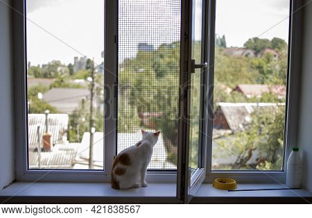 Little Cute White Cat Sitting On A Window Sill Looking At The Street Through The Window.
