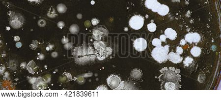 petri dish with bacteria and fungi colonies in laboratory test
