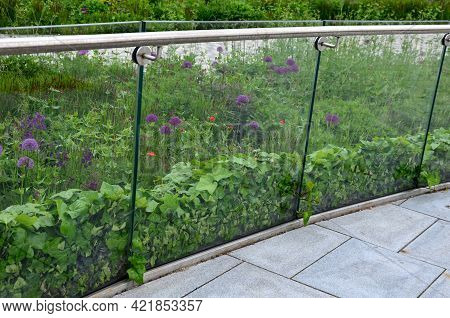 Ivy Surrounds A Glass Railing Near The House. It Must Be Kept Down By The Cut, Otherwise It Will Cli