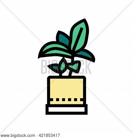 Green Leaves Houseplant In Pot Color Icon Vector. Green Leaves Houseplant In Pot Sign. Isolated Symb