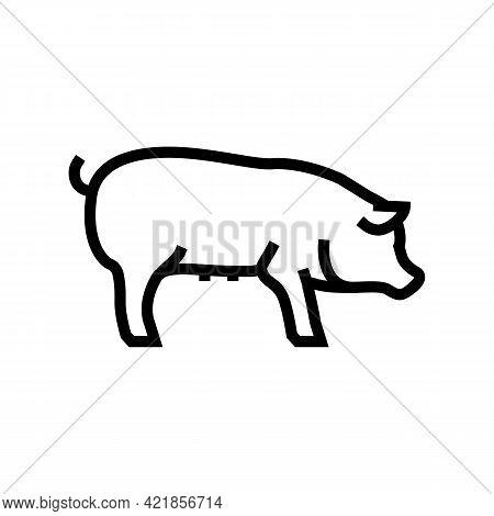 Pig Domestic Animal Line Icon Vector. Pig Domestic Animal Sign. Isolated Contour Symbol Black Illust