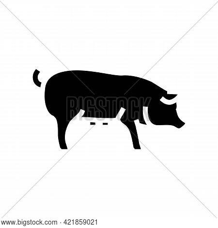 Pig Domestic Animal Glyph Icon Vector. Pig Domestic Animal Sign. Isolated Contour Symbol Black Illus