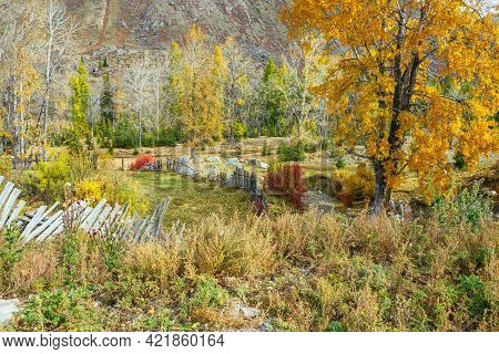 Colorful Autumn Landscape With Birch Tree With Golden Foliage In Mountain Garden Among Gold Fall Lea
