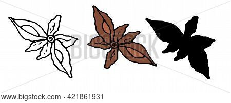 Vector Set Of Isolated Anise Star Sketch Elements With Irregular Shape Seeds, Brown And Black Outlin