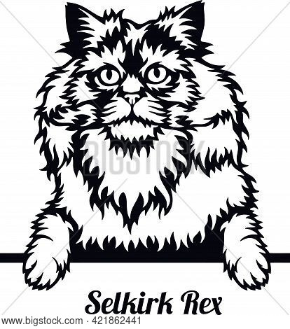 Selkirk Rex Cat - Cat Breed. Cat Breed Head Isolated On A White Background