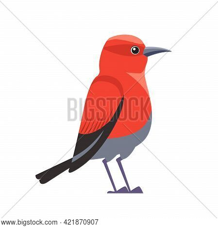 Red Bird Apapane Hawaiian Honeycreeper. Exotic Rare Bird Of The Critically Endangered Apapane Endemi