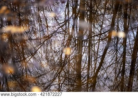 Fallen Yellow Leaf Floats In Puddle. Trees Reflected On The Surface Of The Water Puddle. Autumnal La