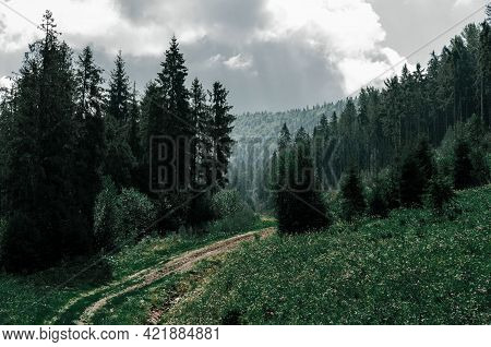 Old Dirt Road Overgrown With Grass Among Tall Coniferous Trees In Forest, Mountainside Overgrown Wit