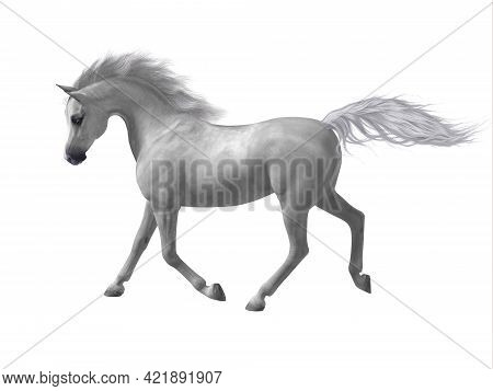 Arabian Horse 3d Illustration - The Arabian Or Arab Is A Distinctive Breed Of Horse Developed In The