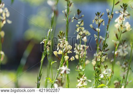 Beautiful wildflowers on a green meadow in summer season. Natural background.