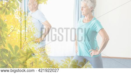 Composition of senior man and woman exercising in fitness class with tree overlay. retirement, fitness and active lifestyle concept digitally generated image.