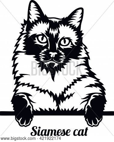 Siamese Cat - Cat Breed. Cat Breed Head Isolated On A White Background