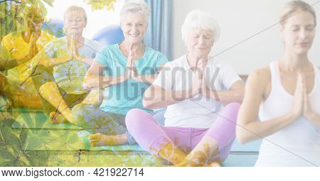 Composition of senior women exercising in fitness class with tree overlay. retirement, fitness and active lifestyle concept digitally generated image.