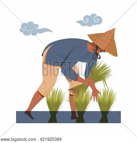 Asian Farmer In Straw Conical Hat Gathering Rice Grass In Bundles Vector Illustration