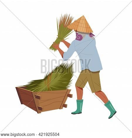 Asian Farmer In Straw Conical Hat Gathering Bundles Of Rice Grass In Wooden Crate Vector Illustratio