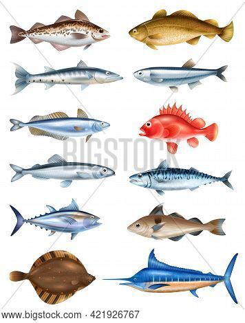 Sea Fish Realistic Set With Different Types Symbols Isolated Vector Illustration