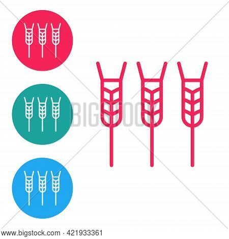 Red Line Cereals Set With Rice, Wheat, Corn, Oats, Rye, Barley Icon Isolated On White Background. Ea