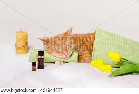 Sleeping Cat On A Massage Towel. A Cat Sleeps Resting His Head On A Towel On A Massage Table While T