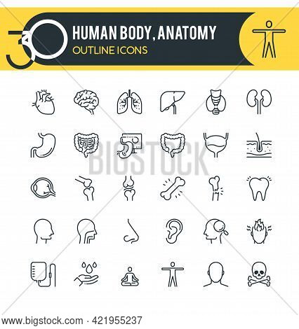 Set Of Outline Icons On Following Topics Human Body, Anatomy Organs. Each Icon Neatly Designed On Pi