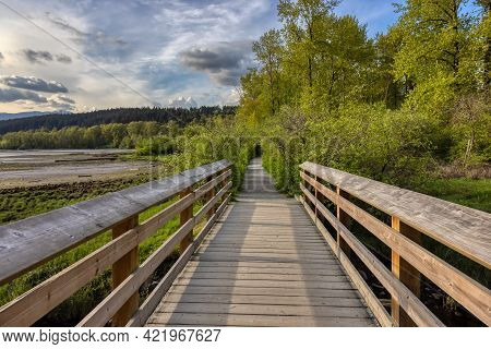 View Of A Wooden Path Qith Fresh Green Trees In Shoreline Trail, Port Moody, Greater Vancouver, Brit