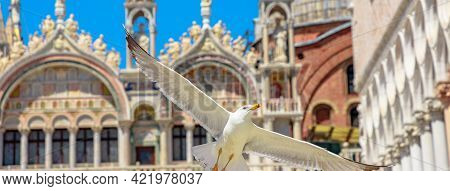 Seagull Flying In San Marco Square Of Venice City Of Italy With Saint Mark Basilica Behind.