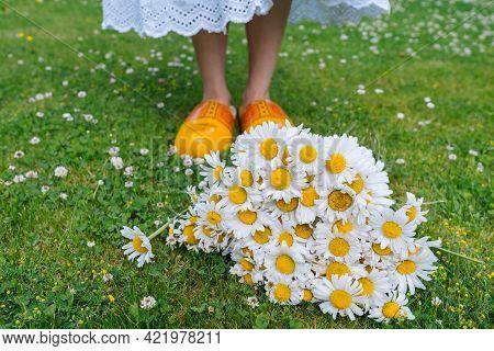 Bouquet Beautiful White Daisies In Summer Garden. Chamomiles In Green Grass. Women Wearing In White