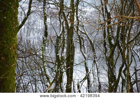Snow covered woodland and lake