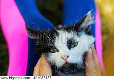 Defocus Female Hand Stroking And Caress Cute Adorable Black And White Cat, Kitten With Beautiful Yel