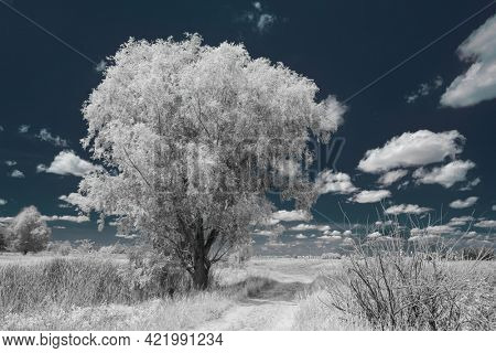 Near infrared photography of beautiful rural landscape and clouds in the sky. Picture was taken with infrared-pass filter.