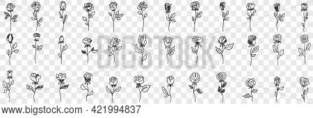 Blooming Rose Flowers Doodle Set. Collection Of Hand Drawn Various Blossom Roses Floral Pattern Deco