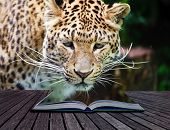 Creative composite image of leopard in pages of magic book poster