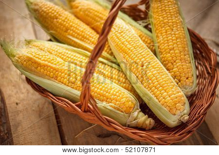 Ear of corn, revealing yellow kernels