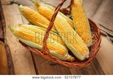 Ears of sweet corn